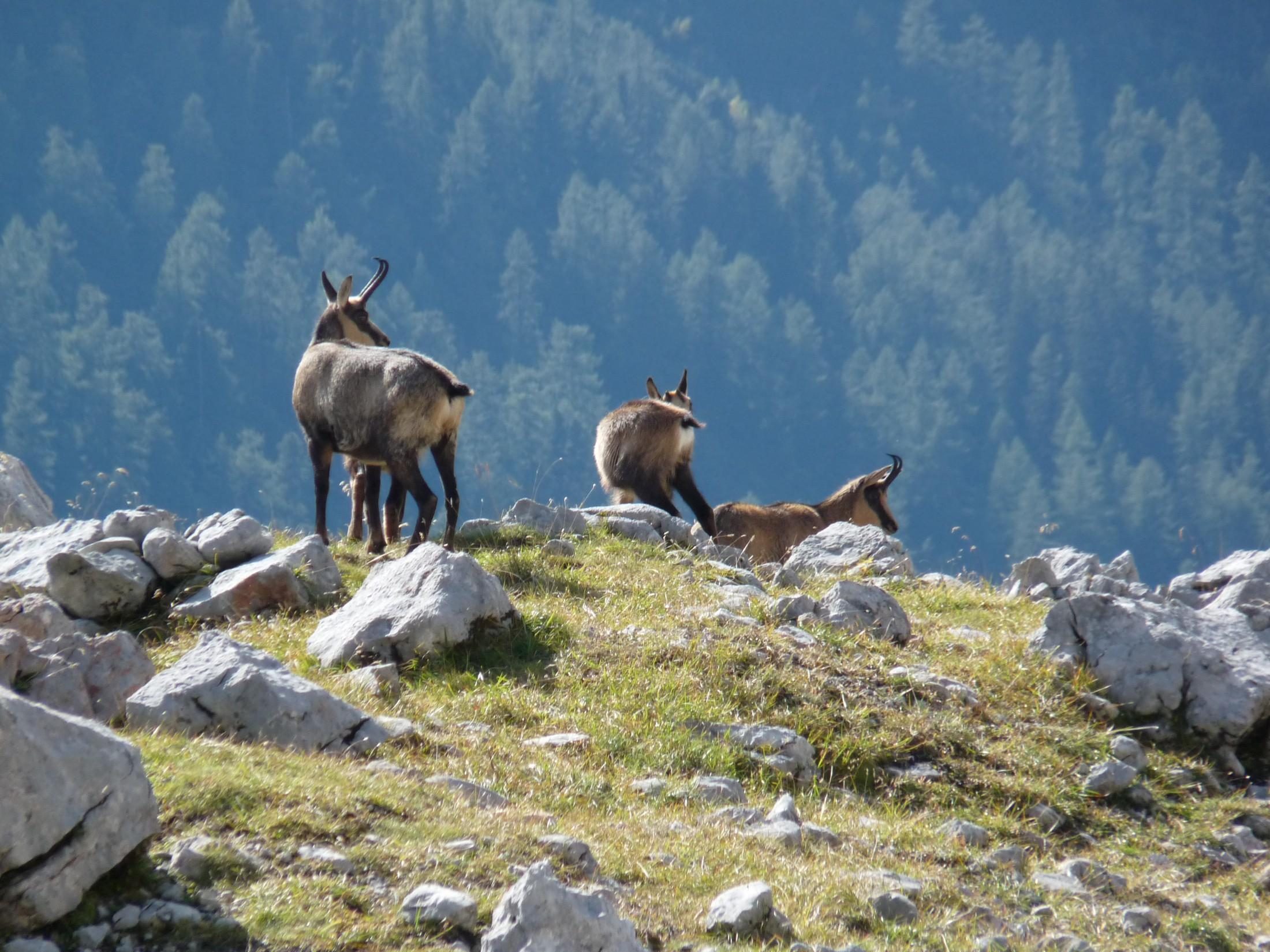 Klettersteig Set Leihen Berchtesgaden : Alpincenter berchtesgaden alpinhotel skischule skitourenpark